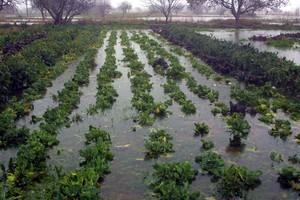 Ζημιές σε 20.000 στρέμματα στην Καρδίτσα